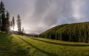 Картинка лес, деревья, луг, Romania, Румыния, Трансильвания, Transylvania