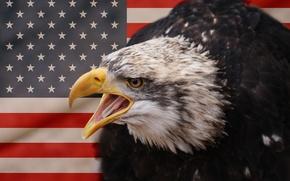 Картинка bird, eagle, american eagle