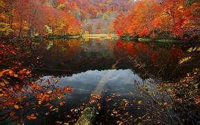 Картинка осень, лес, листья, вода, деревья, озеро, склон, багрянец