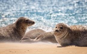 Картинка море, природа, seal