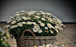 Картинка Цветы, Корзина, Корзина с Цветами
