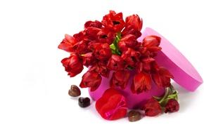 Картинка любовь, цветы, тюльпаны, valentine's day, красные тюльпаны