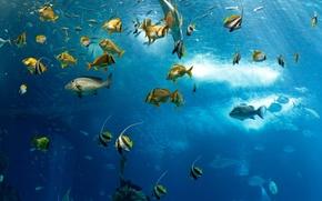 Картинка море, океан, рыба, под водой, underwater, sea, ocean, fish