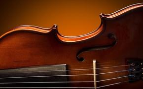 Картинка макро, скрипка, блеск, лак, Royal Violin