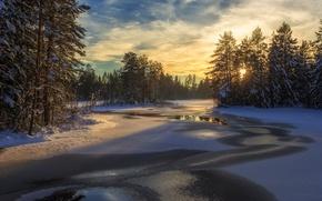Обои лес, Швеция, деревья, зима, снег, озеро