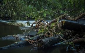 Картинка вода, Река, коряга, пороги