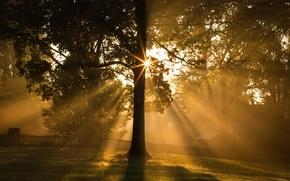 Картинка свет, дерево, утро