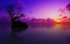 Картинка закат, дерево, цвет