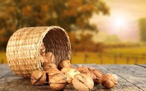 Обои солнце, стол, Осень, орехи, лукошко