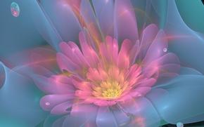 Обои зелёный, лепестки, линии, цветок, розовый