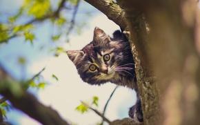Картинка кот, дерево, кошак, котяра