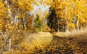 Обои осень, природа, парк