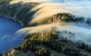 Картинка лес, природа, туман, озеро, утро