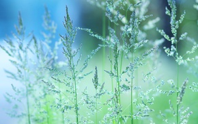Картинка зелень, трава, макро, настроение