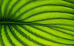 Картинка макро, лист, растение
