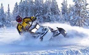 Картинка Деревья, Снег, Снегоход, Snowmobile, Ski-Doo