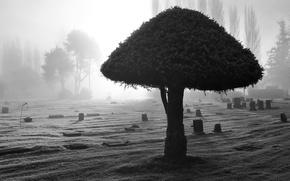 Обои черно-белый, 155, свет, дерево, кладбище