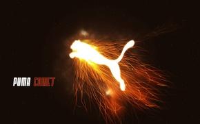 Картинка огонь, пламя, сила, Бренд, пума, Puma