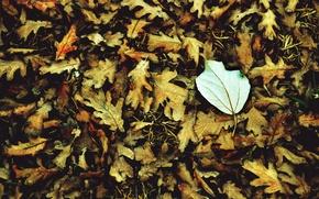 Картинка осень, белый, листья, макро, фон, widescreen, обои, листик, wallpaper, листочки, широкоформатные, background, macro, полноэкранные, HD …