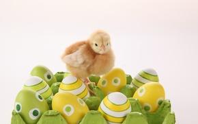 Картинка яйцо, пасха, цыплёнок, easter