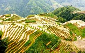 Картинка поля, Китай, террасы, Guilin, Гуанчжоу
