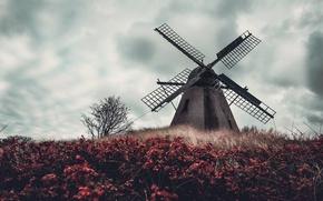 Картинка небо, цветы, мельница