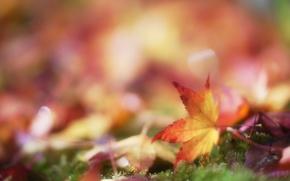 Картинка осень, листья, мох, размытость, листик, боке