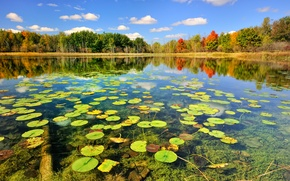Обои озеро, осень, лес, природа