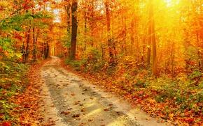 Картинка Природа, Дорога, Осень, Лес, Листья