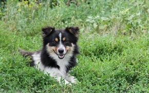 Картинка животные, трава, собака