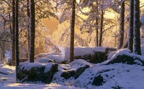 Обои камни, свет, снег, лес, зима