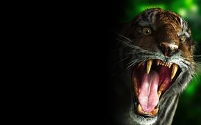 Обои тигр, злой, зубы