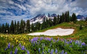 Картинка цветы, горы, природа, весна, облака, небо, трава, пейзаж