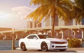 Картинка белый, небо, облака, мост, город, пальма, побережье, Chevrolet, Camaro, white, шевроле, мускул кар, небоскрёбы, передняя …