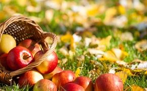 Картинка корзина, яблоки, фрукты, трава, листья
