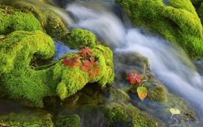 Обои камни, вода, мох
