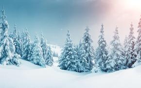 Обои зима, лес, снег, снежинки, елка, nature, winter, snow