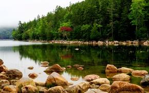 Картинка лес, деревья, туман, река, камни, США, Maine, Acadia National Park