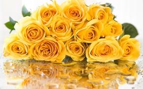 Обои роза, отражение, желтый, капли