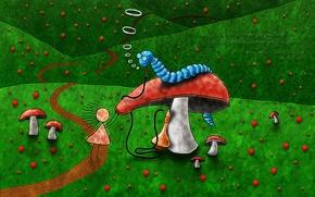 Обои гусеница, грибы, тропа, Алиса