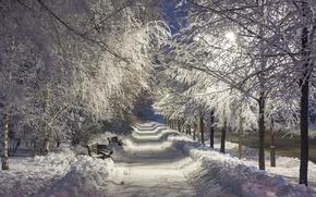 Картинка зима, снег, ночь, парк, night, park, winter, snow