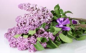 Картинка листья, цветы, ветки, весна, фиолетовые, бант, сирень
