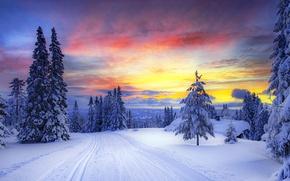 Обои норвегия, зима, снег, деревья, елки