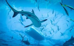 Обои Ocean, Shark, Diving
