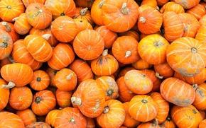 Картинка осень, краски, тыква, рынок