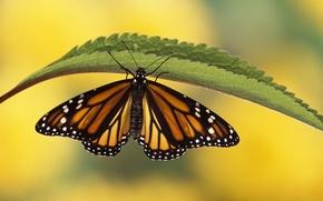 Картинка лист, бабочка, растение, крылья