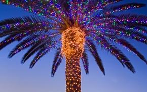 Картинка пальма, новый год, рождество, Калифорния, США, гирлянда, долина Темекула