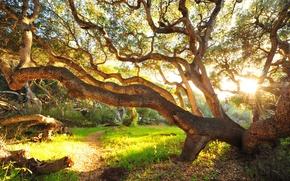 Обои дерево, утро, кусты, трава