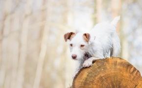 Картинка собака, бревно, пёсик