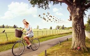 Картинка девушка, велик, улыбка, дерево, мёд, рой, осы, белки